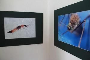 Részletek  Természetfotó kiállítás