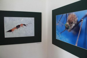 részletek kiállítás 2012 (4)