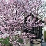 Kút a Kossuth utcában tavasszal