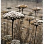 téli Perbál (11)
