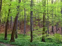 erdő2